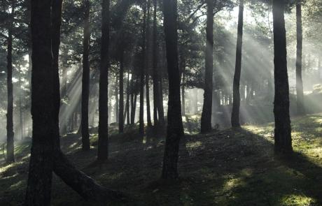 Bosque del Cabeza Lijar