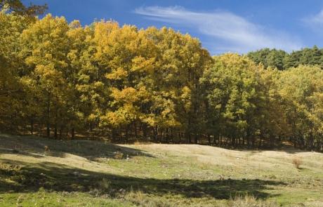 Bosque otoñal en el Valle del Lozoya