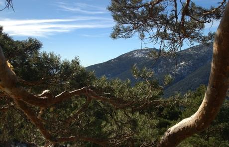 Bosque de Siete Picos