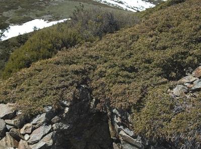 Linea de trinchera en Fuenfría