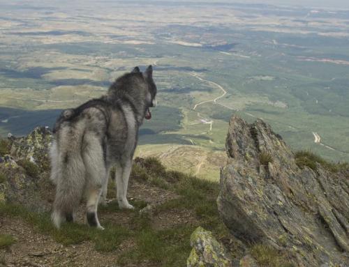 Perros y montaña